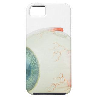 Model human eye isolated on white background.jpg iPhone 5 cases