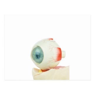 Model human eye isolated on white background.jpg postcard
