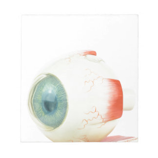 Model human eye isolated on white background.jpg scratch pads