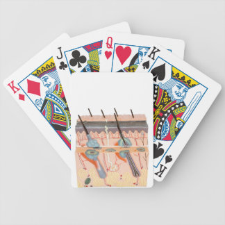 Model human skin tissue on white background bicycle playing cards