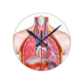 Model internal human body on white background round clock