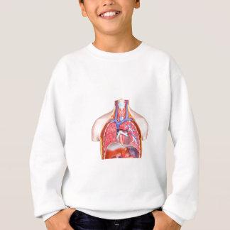 Model internal human body on white background sweatshirt