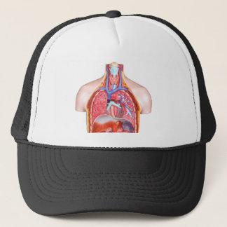 Model internal human body on white background trucker hat