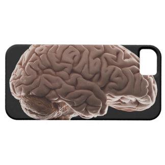 Model of human brain, studio shot iPhone 5 cover