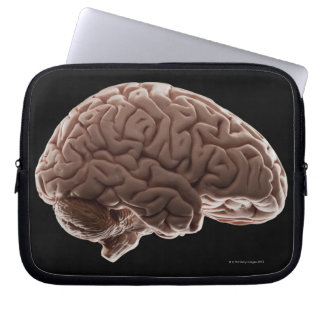 Model of human brain, studio shot laptop sleeve