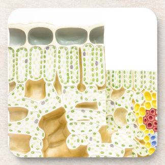 Model plant cells with chloroplasts chlorophyll beverage coasters
