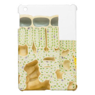 Model plant cells with chloroplasts chlorophyll iPad mini cases