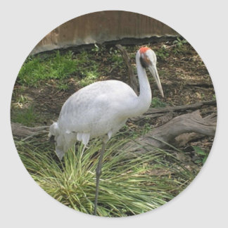 Moderaly Close Shot of Brolga2500.jpg Classic Round Sticker