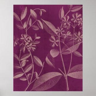 Modern Botany III Poster