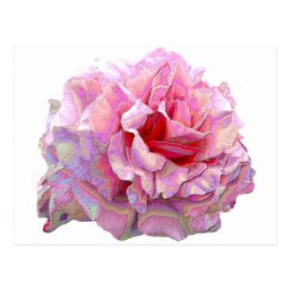 modern english garden rose postcard