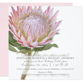 Modern Floral Elegant Simple Pink Protea Flower Card