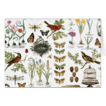 modern vintage french botanical birds and flowers note card