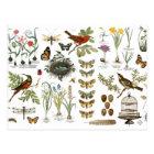 modern vintage french botanical birds and flowers postcard