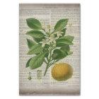 modern vintage french country botanical art orange tissue paper