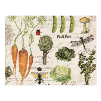 modern vintage french vegetable garden postcard