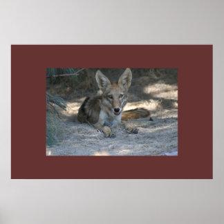 Mojave Desert Coyote Poster