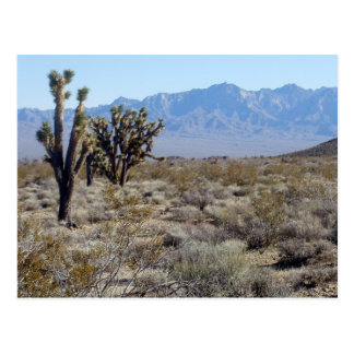 Mojave Desert scene 03 Postcard