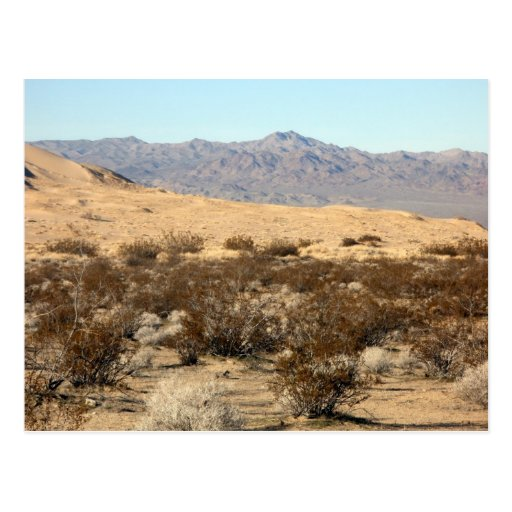 Mojave Desert scene 04 Postcard