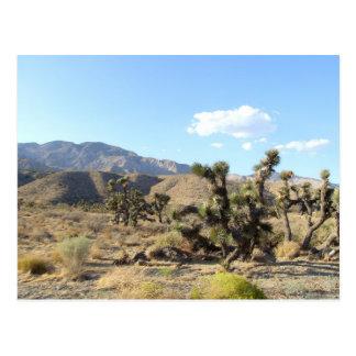Mojave Desert scene 06 Postcard