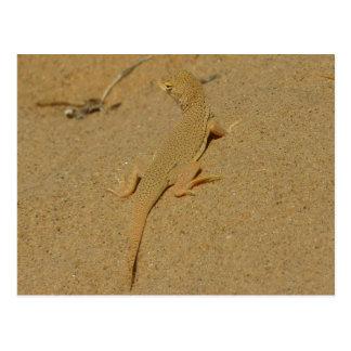 Mojave Fringe-Toed Lizard Desert Photography Postcard