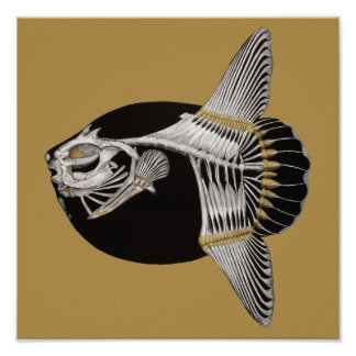 Mola Rotunda Sunfish Fish Skeleton Art Print