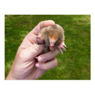mole in hand against grass.jpg postcard