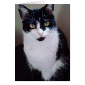 mollycat card