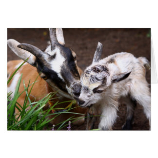 Mom and Baby Goat Card