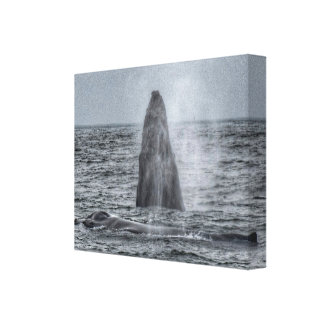 Mom and breaching calf humpback whale canvas