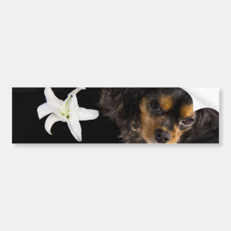 Mom…Cavalier King Charles Spaniel Bumper Sticker