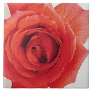 Mom's Red Rose Tile