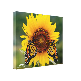 Monarch Butterfies on Sunflower Stretched Canvas Print