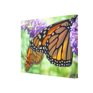 Monarch Butterflies canvas art prints Butterfly Stretched Canvas Print