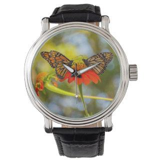 Monarch Butterflies on a Wildflower Watch