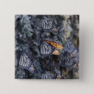 Monarch Butterflies on Pine Tree, Sierra Chincua 2 15 Cm Square Badge