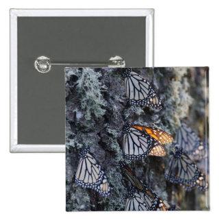 Monarch Butterflies on Pine Tree, Sierra Chincua 2 15 Cm Square Badge