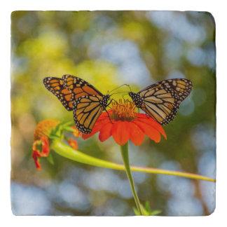 Monarch Butterflies on Wildflowers Trivet
