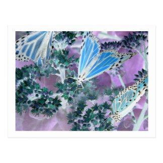 Monarch Butterflies Post Card