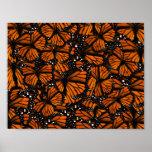 Monarch Butterflies Swarming