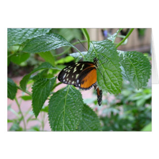Monarch Butterfly 215 Greeting Card