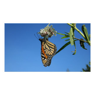 Monarch Butterfly Against Blue Sky - Poster