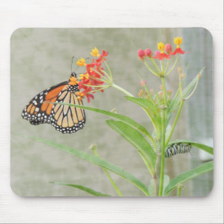 Monarch Butterfly and Caterpillar Mouse Pad