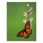 Monarch Butterfly and Flower On Green Background Photographic Print