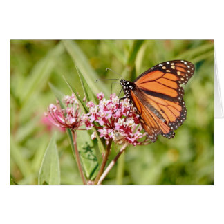 Monarch Butterfly and Friend Greeting Card