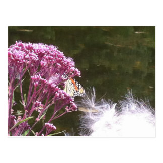 Monarch Butterfly and Milkweed Postcard