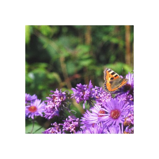 Monarch butterfly and purple flowers stretched canvas prints