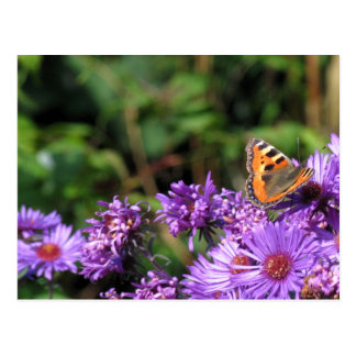 Monarch butterfly and purple flowers post card