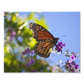 Monarch Butterfly Art Photo