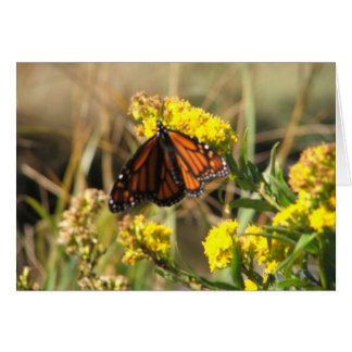 Monarch Butterfly At Rest Greeting Card