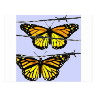 Monarch butterfly  behind barbed wire postcard
